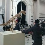 hire dinosaur skeletons unique event hire hire a gorilla for tv film events