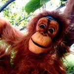 baby-orangutan-puppet